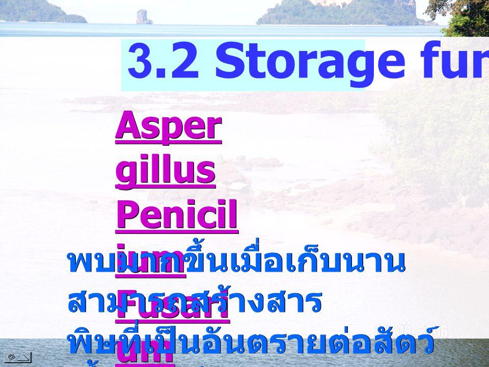 3.2 Storage fungi Aspergillus Penicilium Fusarium