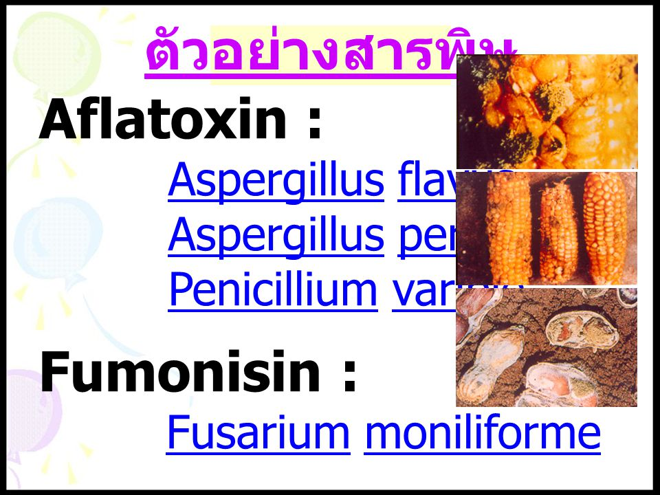 ตัวอย่างสารพิษ Aflatoxin : Fumonisin : Aspergillus flavus