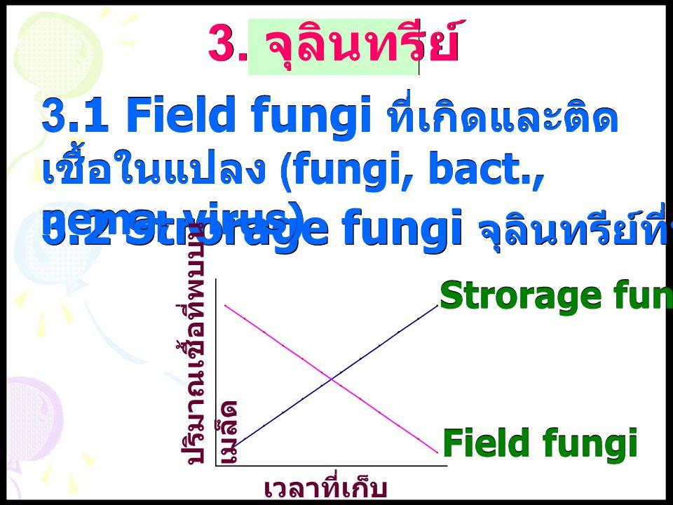 3. จุลินทรีย์ 3.1 Field fungi ที่เกิดและติดเชื้อในแปลง (fungi, bact., nema, virus) 3.2 Strorage fungi จุลินทรีย์ที่พบเมื่อเก็บนานๆ.