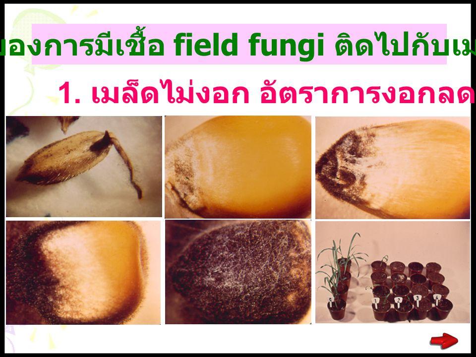 ผลเสียของการมีเชื้อ field fungi ติดไปกับเมล็ดพันธุ์