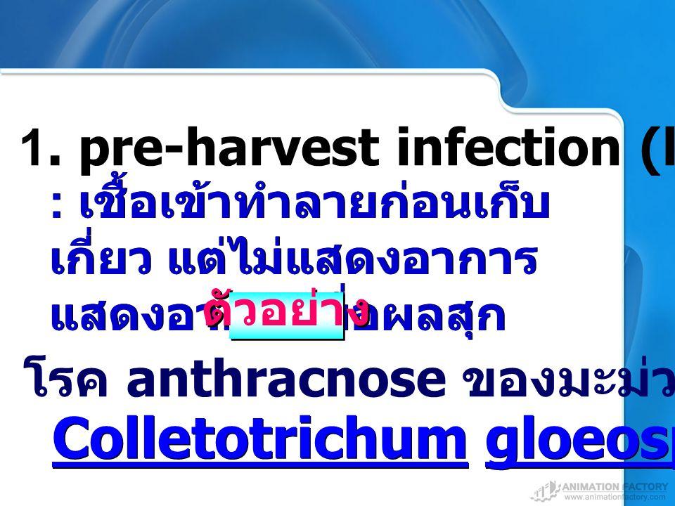 Colletotrichum gloeosporioides