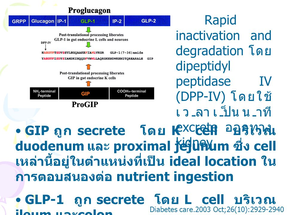 GLP-1 ถูก secrete โดย L cell บริเวณ ileum และcolon