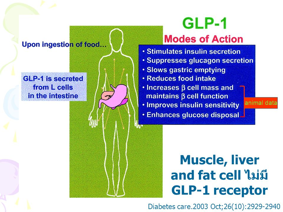 Muscle, liver and fat cell ไม่มี GLP-1 receptor