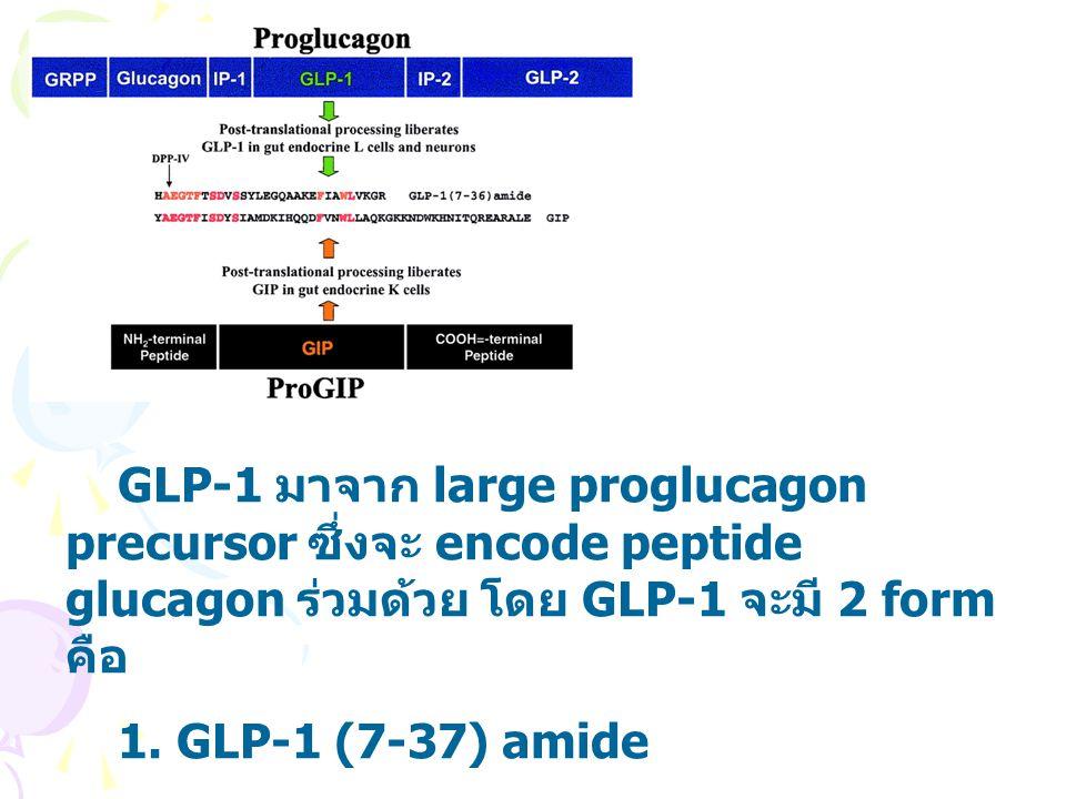 GLP-1 มาจาก large proglucagon precursor ซึ่งจะ encode peptide glucagon ร่วมด้วย โดย GLP-1 จะมี 2 form คือ