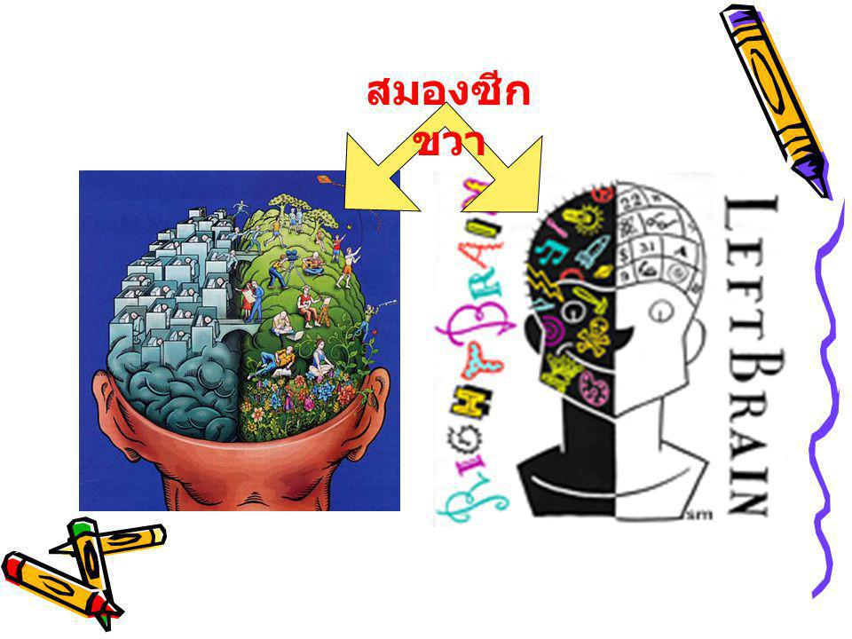 สมองซีกขวา