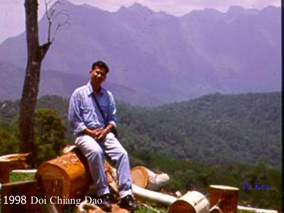 Pa Kea 1998 Doi Chiang Dao