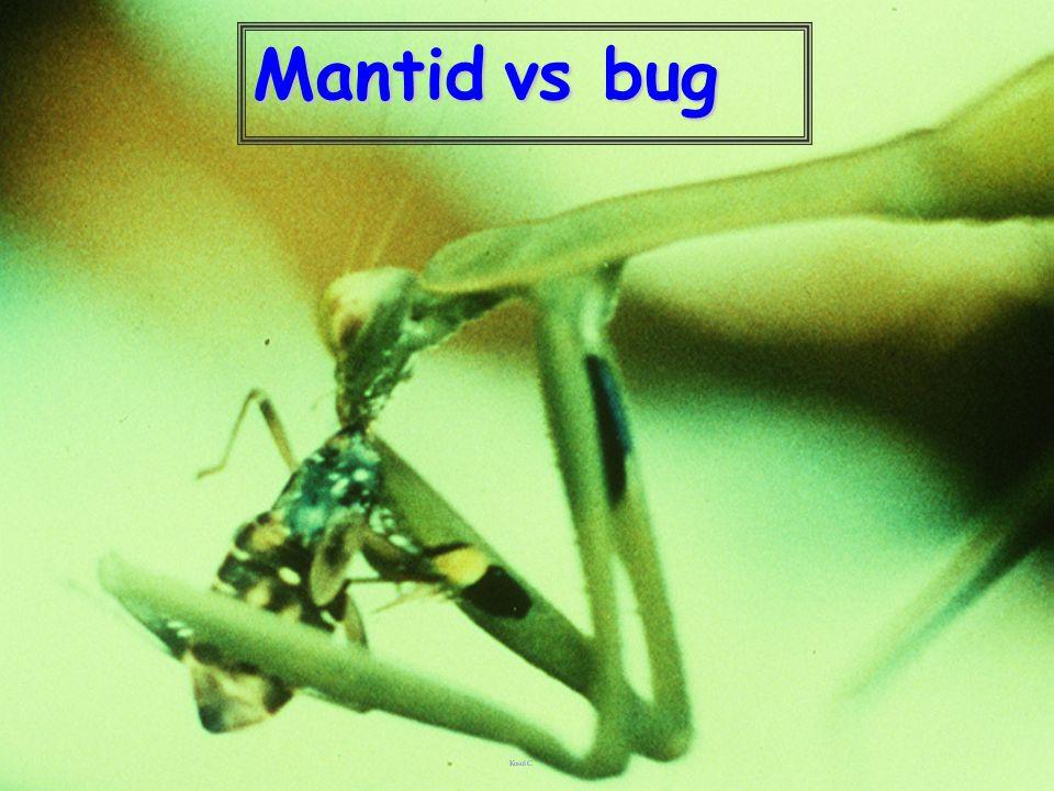Mantid vs bug