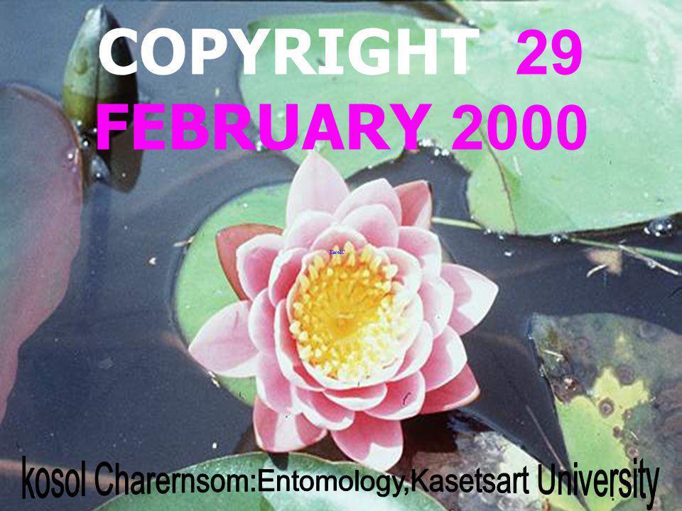 kosol Charernsom:Entomology,Kasetsart University