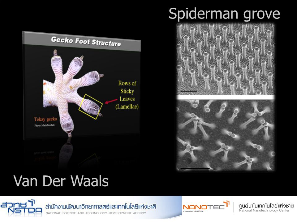 Spiderman grove Van Der Waals