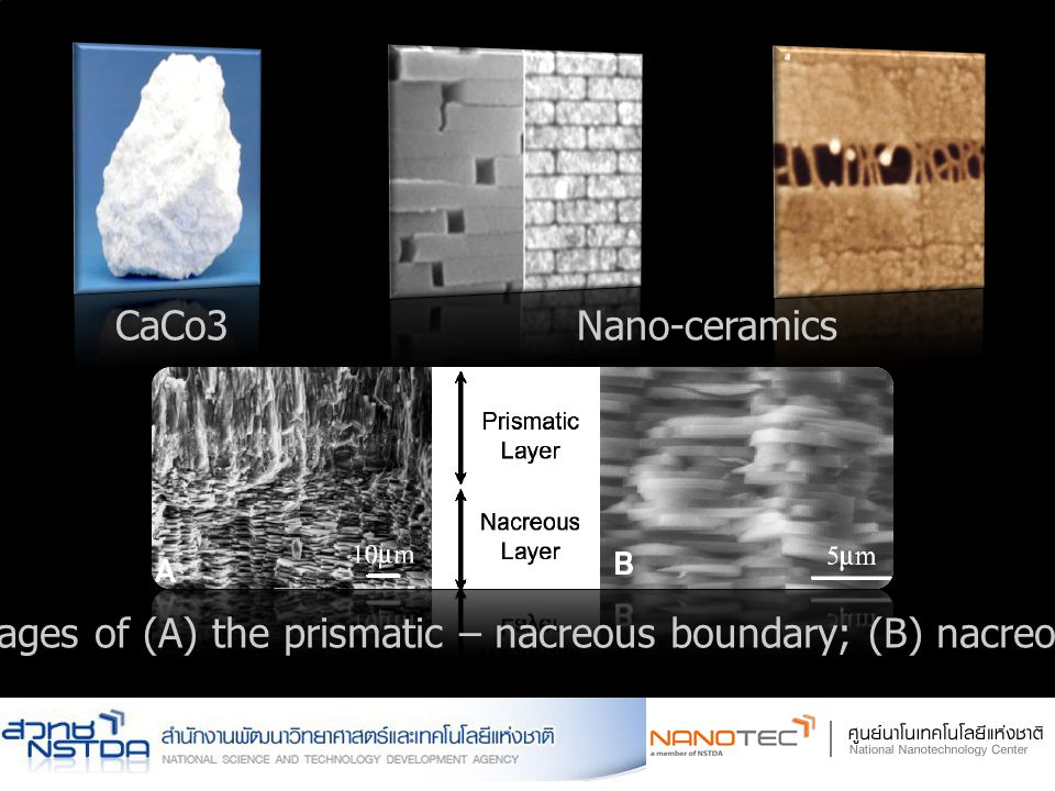CaCo3 Nano-ceramics SEM images of (A) the prismatic – nacreous boundary; (B) nacreous layer
