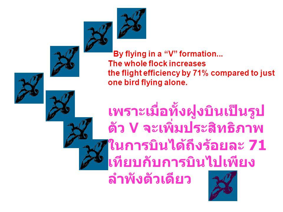 เทียบกับการบินไปเพียงลำพังตัวเดียว