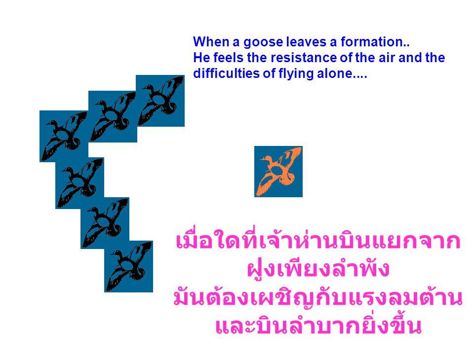 เมื่อใดที่เจ้าห่านบินแยกจากฝูงเพียงลำพัง