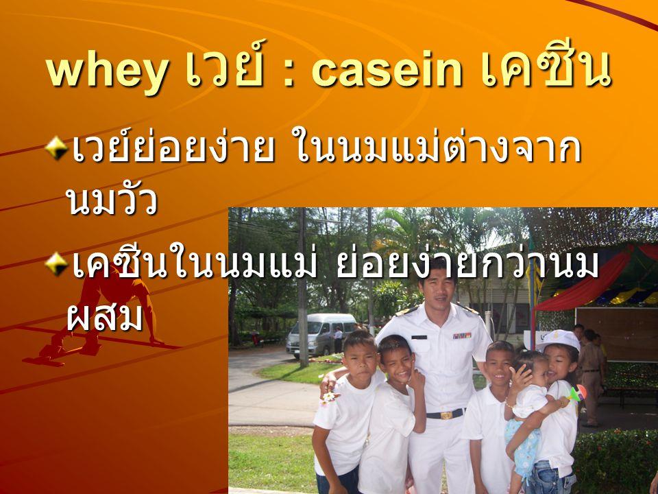 whey เวย์ : casein เคซีน