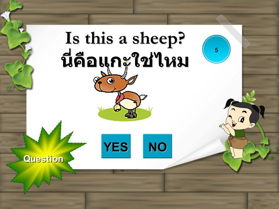 Is this a sheep นี่คือแกะใช่ไหม
