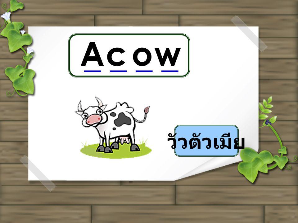 A c o w _ _ _ _ วัวตัวเมีย