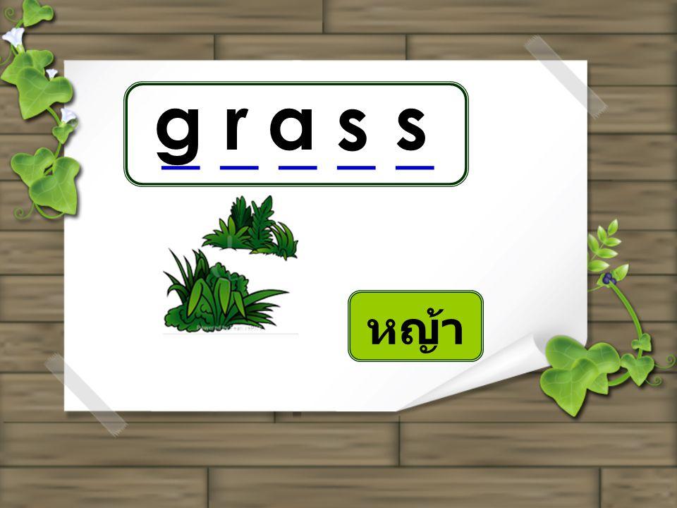 g r a s s _ _ _ _ _ หญ้า