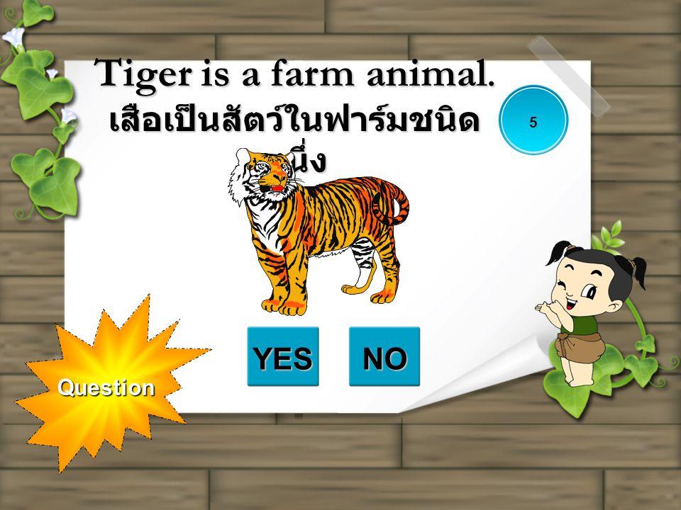 Tiger is a farm animal. เสือเป็นสัตว์ในฟาร์มชนิดหนึ่ง
