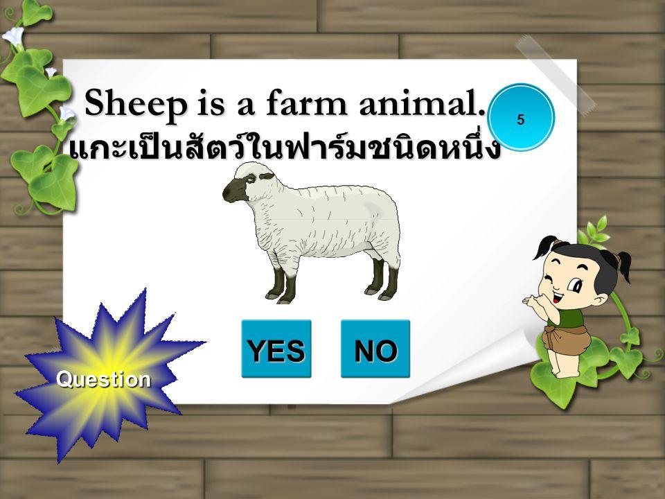 Sheep is a farm animal. แกะเป็นสัตว์ในฟาร์มชนิดหนึ่ง