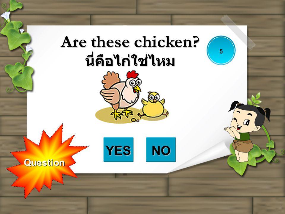 Are these chicken นี่คือไก่ใช่ไหม