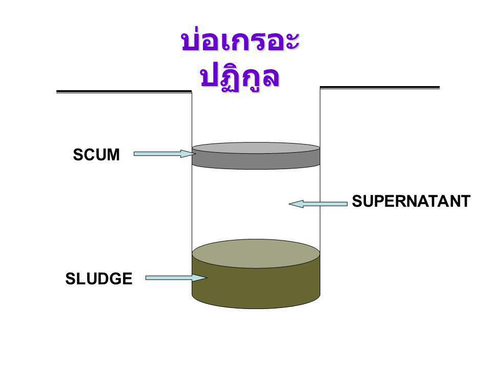 บ่อเกรอะปฏิกูล SCUM SUPERNATANT SLUDGE