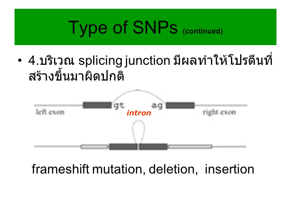 Type of SNPs (continued)