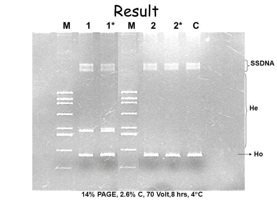 Result M 1 1* M 2 2* C SSDNA He Ho