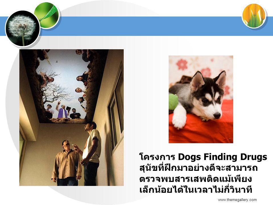 โครงการ Dogs Finding Drugs สุนัขที่ฝึกมาอย่างดีจะสามารถตรวจพบสารเสพติดแม้เพียงเล็กน้อยได้ในเวลาไม่กี่วินาที