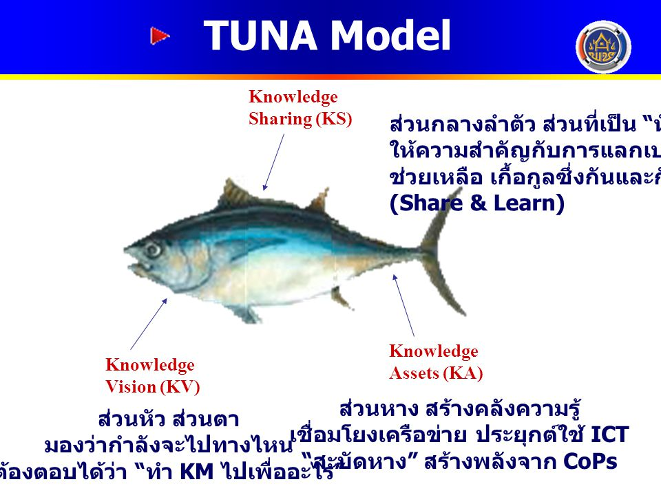 TUNA Model ส่วนกลางลำตัว ส่วนที่เป็น หัวใจ