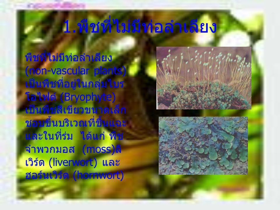 1.พืชที่ไม่มีท่อลำเลียง