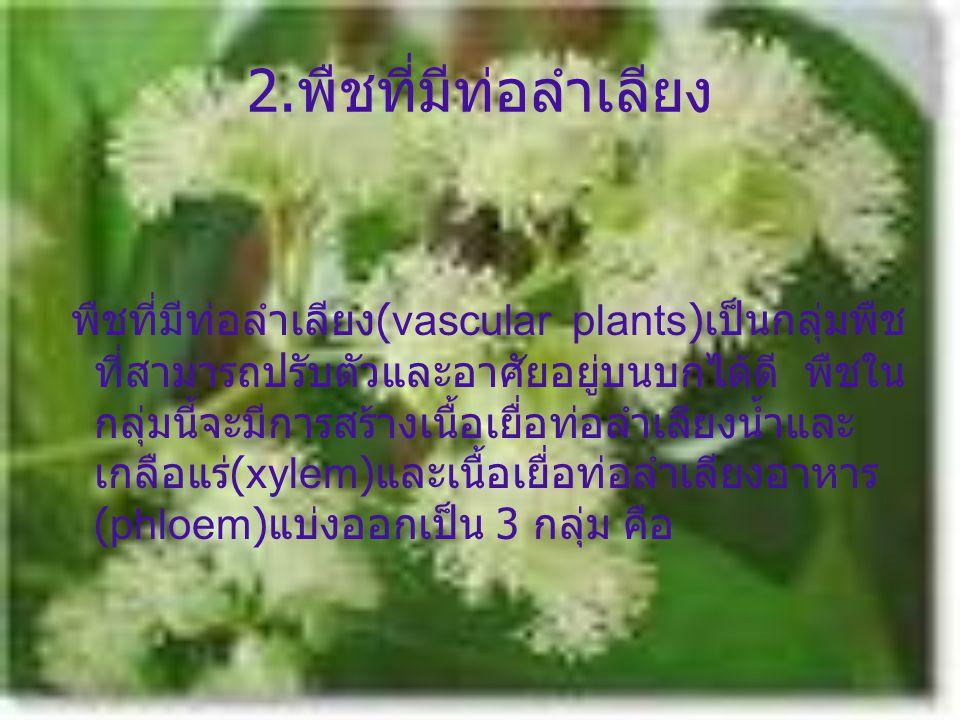 2.พืชที่มีท่อลำเลียง