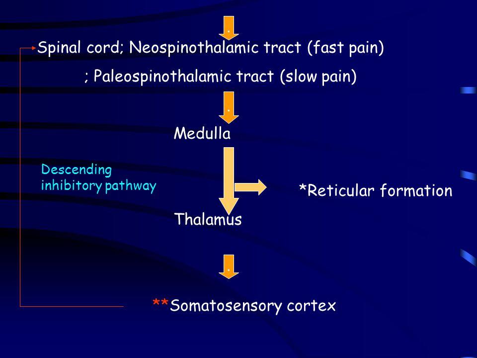 **Somatosensory cortex
