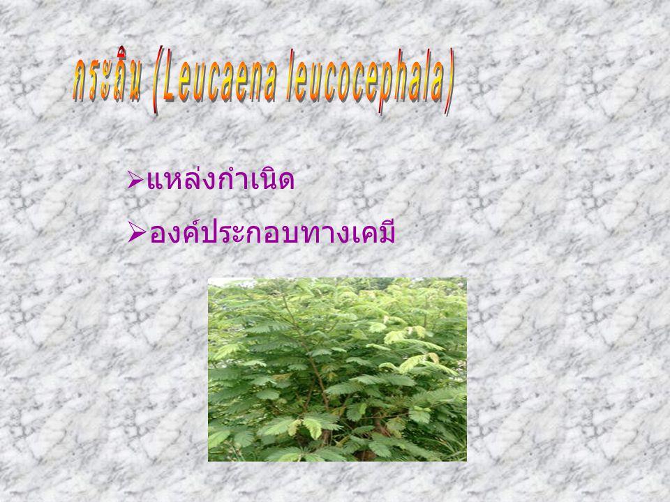 กระถิน (Leucaena leucocephala)