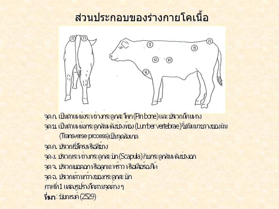 ส่วนประกอบของร่างกายโคเนื้อ