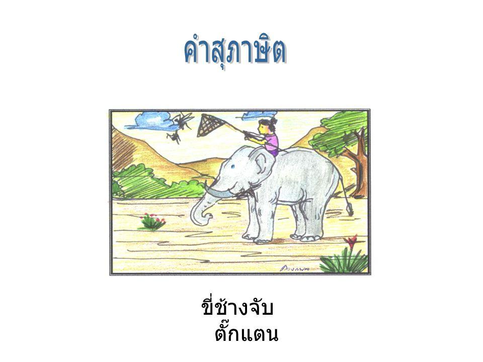 คำสุภาษิต ขี่ช้างจับตั๊กแตน