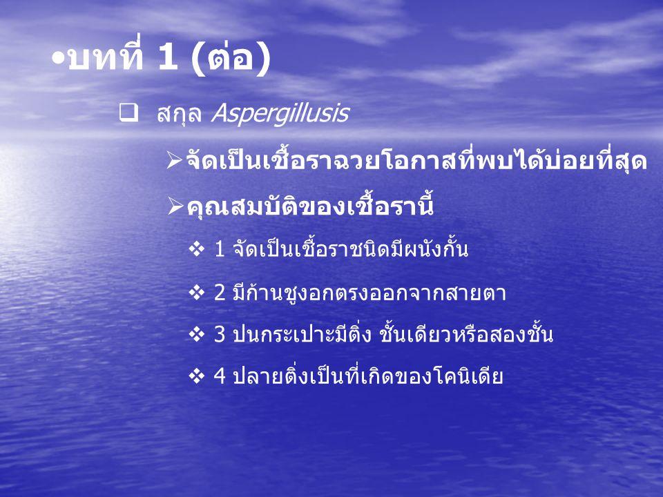 บทที่ 1 (ต่อ) สกุล Aspergillusis