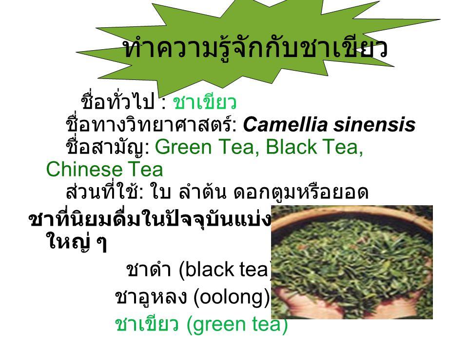 ทำความรู้จักกับชาเขียว