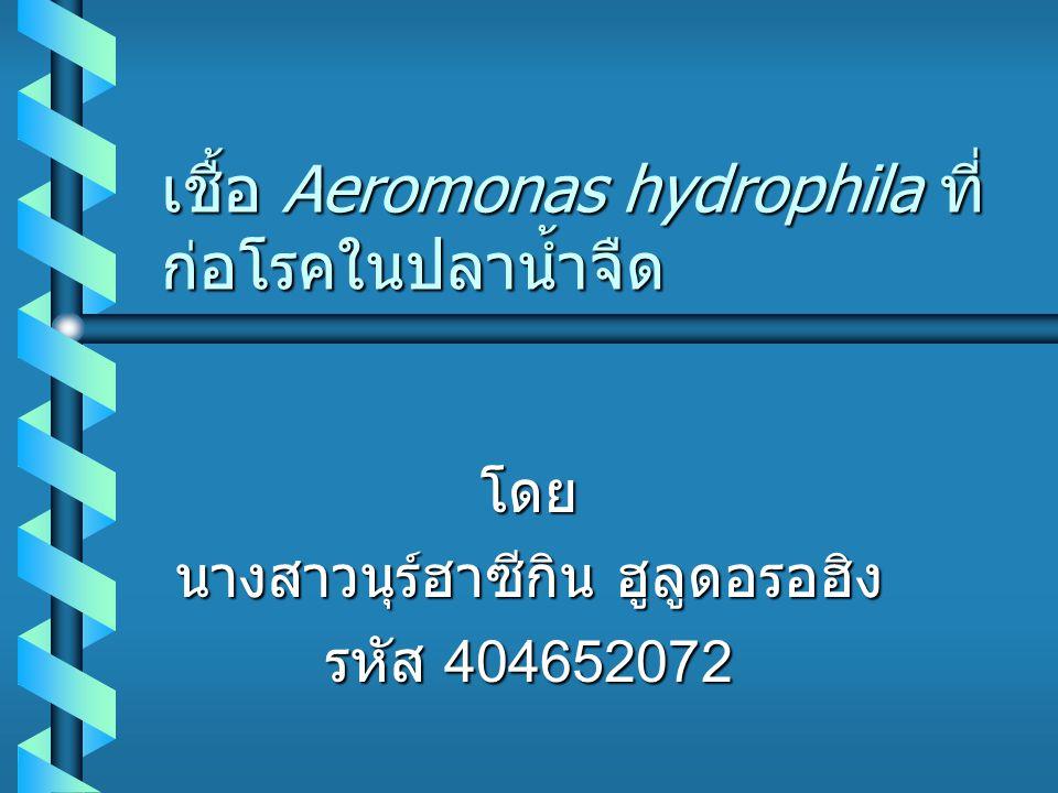 เชื้อ Aeromonas hydrophila ที่ก่อโรคในปลาน้ำจืด