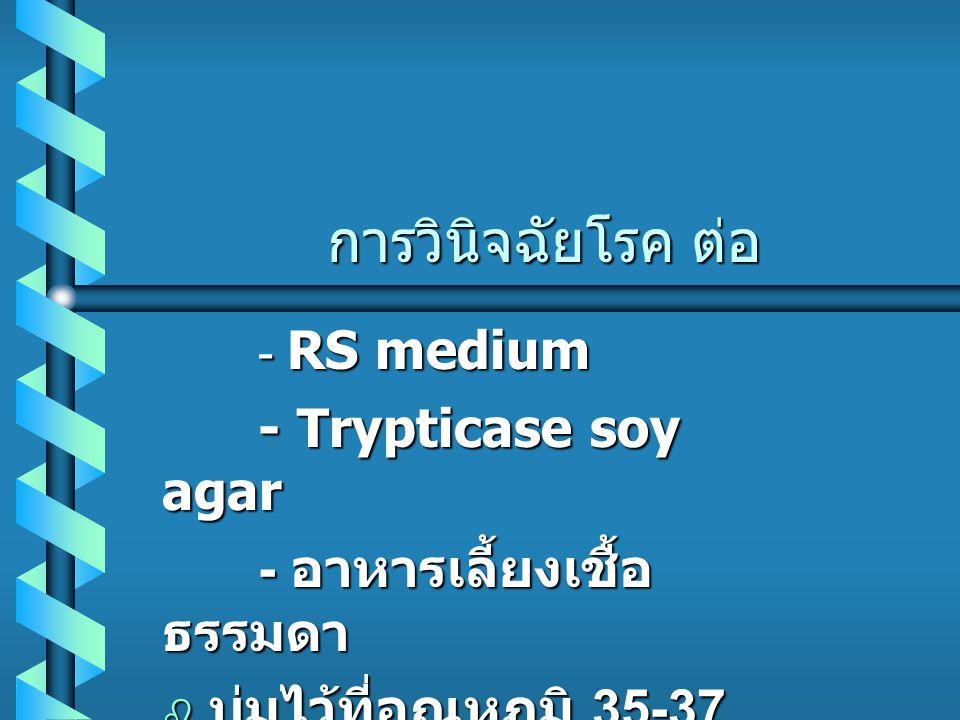 การวินิจฉัยโรค ต่อ - Trypticase soy agar - อาหารเลี้ยงเชื้อธรรมดา