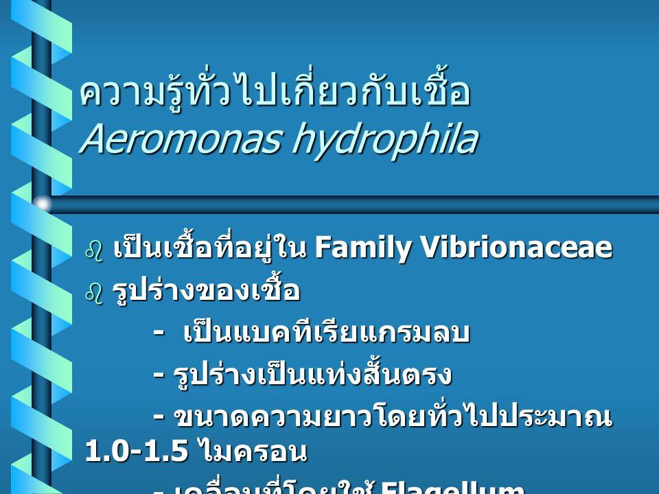 ความรู้ทั่วไปเกี่ยวกับเชื้อ Aeromonas hydrophila