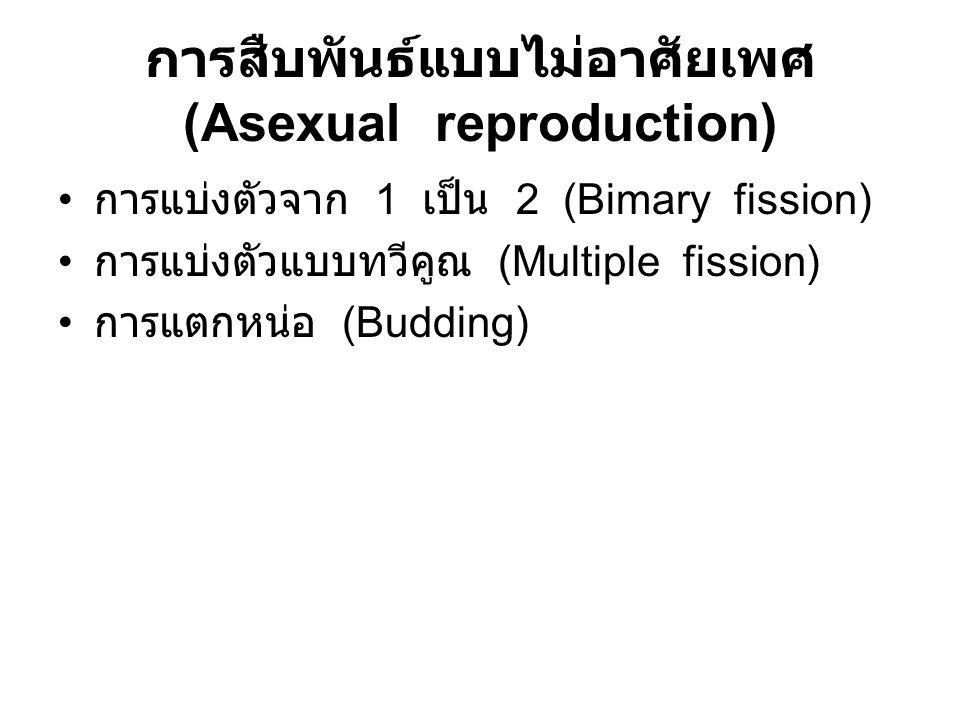 การสืบพันธ์แบบไม่อาศัยเพศ (Asexual reproduction)
