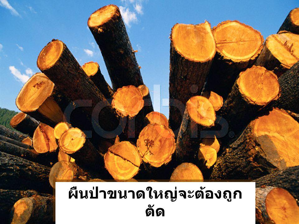 ผืนป่าขนาดใหญ่จะต้องถูกตัด Our forests have been logged