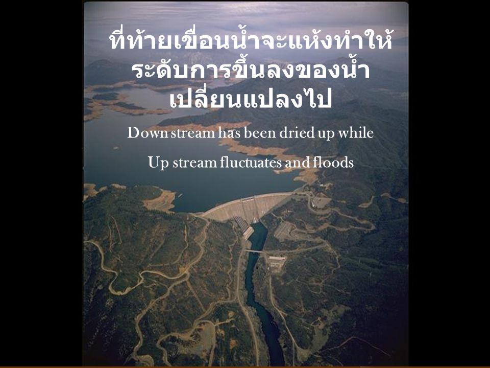ที่ท้ายเขื่อนน้ำจะแห้งทำให้ระดับการขึ้นลงของน้ำเปลี่ยนแปลงไป