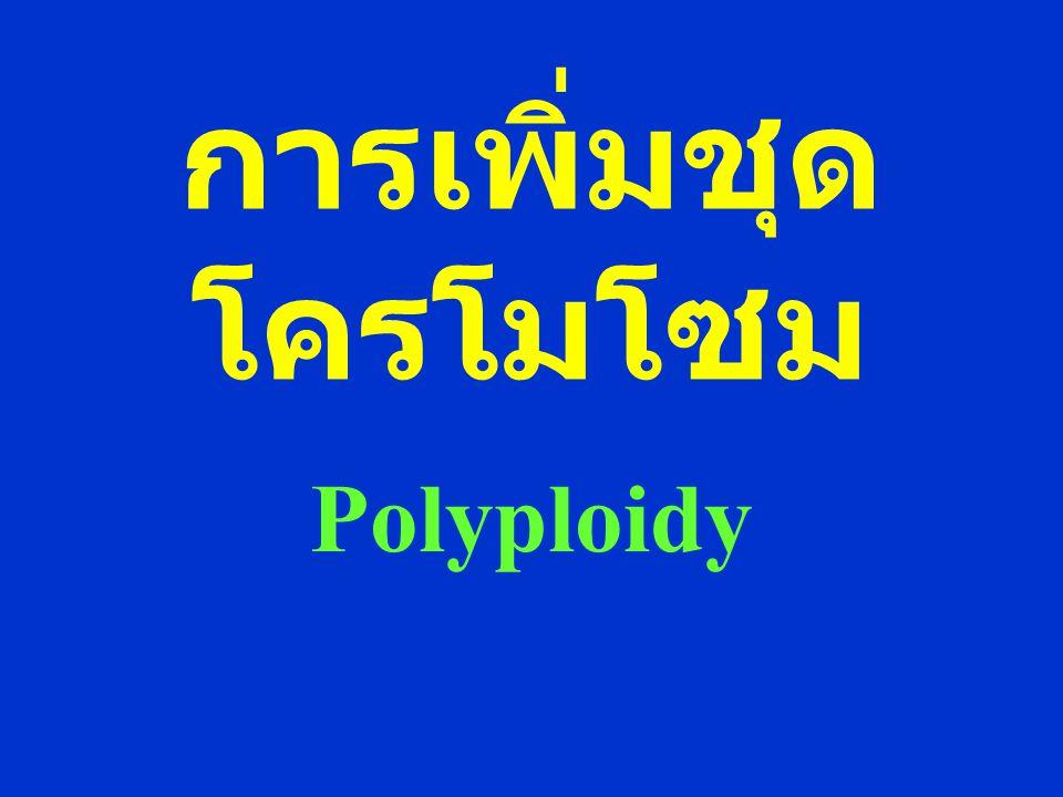 การเพิ่มชุดโครโมโซม Polyploidy