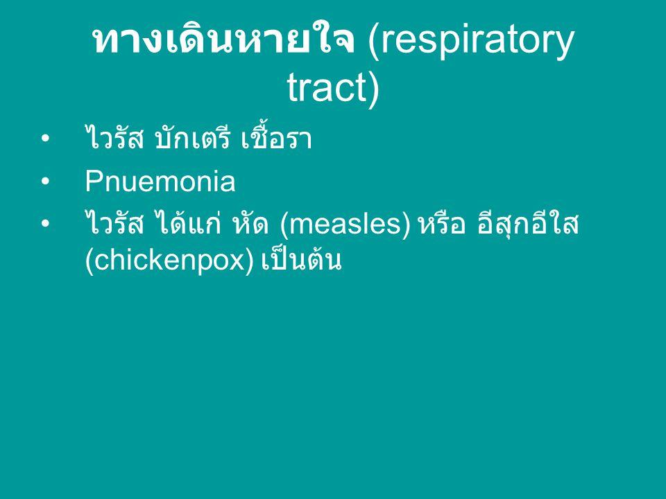 ทางเดินหายใจ (respiratory tract)
