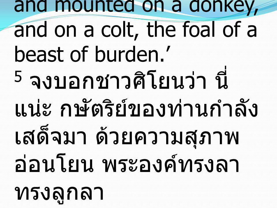 5 Say to the daughter of Zion, 'Behold, your king is coming to you, humble, and mounted on a donkey, and on a colt, the foal of a beast of burden.' 5 จงบอกชาวศิโยนว่า นี่แน่ะ กษัตริย์ของท่านกำลังเสด็จมา ด้วยความสุภาพอ่อนโยน พระองค์ทรงลา ทรงลูกลา