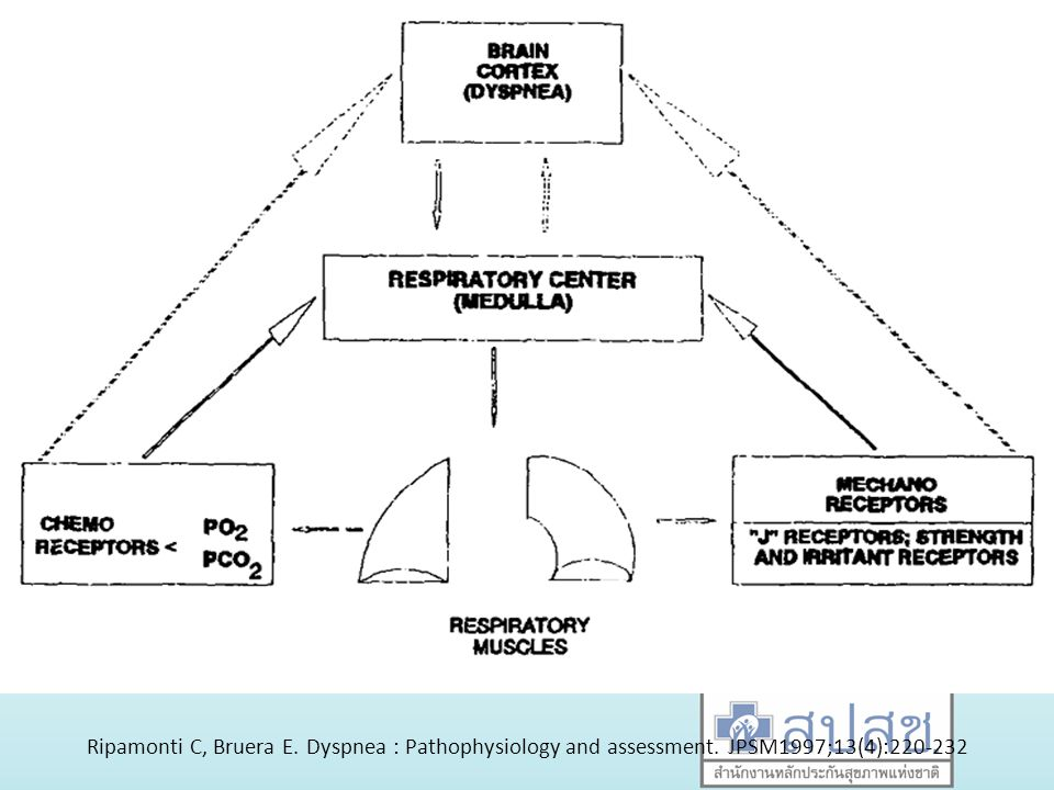 Ripamonti C, Bruera E. Dyspnea : Pathophysiology and assessment