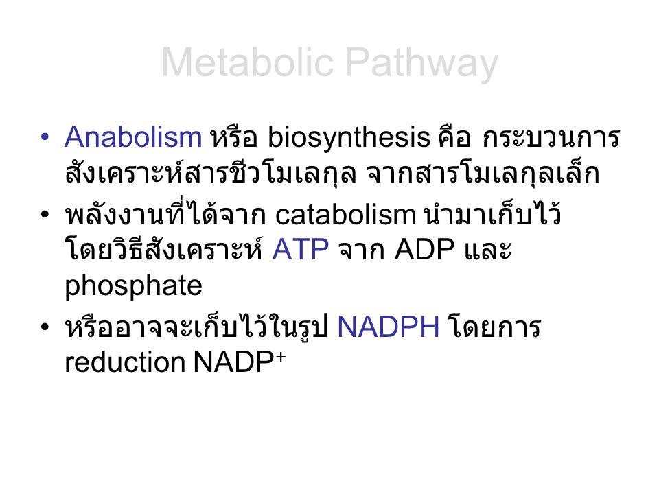 Metabolic Pathway Anabolism หรือ biosynthesis คือ กระบวนการสังเคราะห์สารชีวโมเลกุล จากสารโมเลกุลเล็ก.