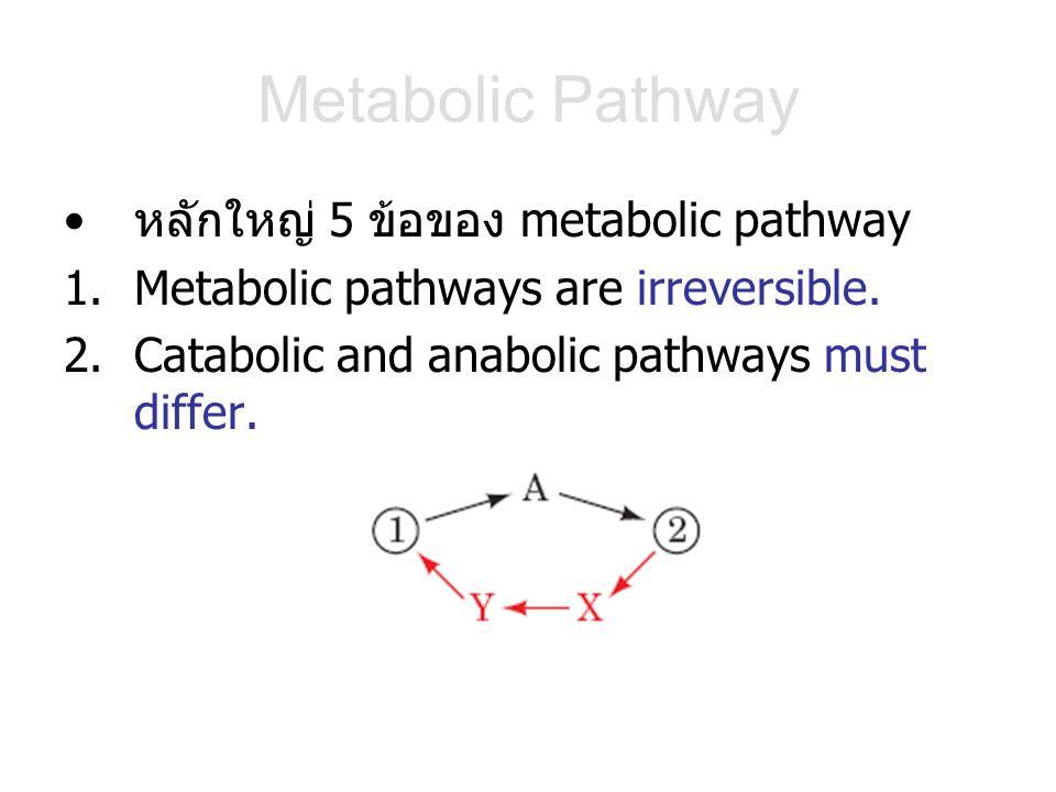 Metabolic Pathway หลักใหญ่ 5 ข้อของ metabolic pathway