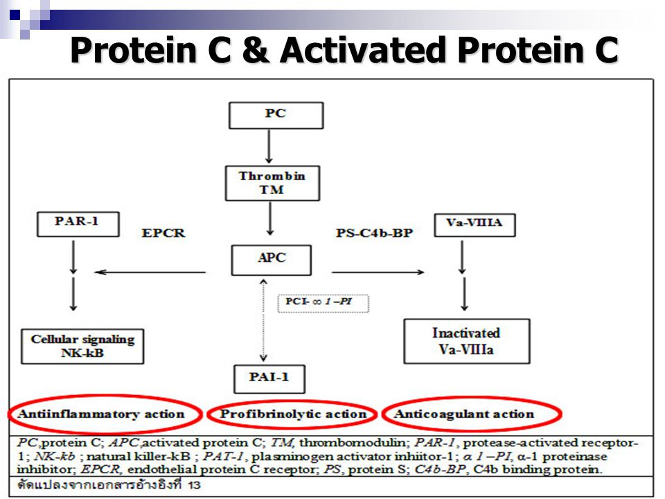 Protein C & Activated Protein C