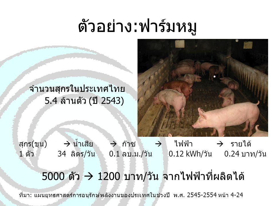 5000 ตัว  1200 บาท/วัน จากไฟฟ้าที่ผลิตได้